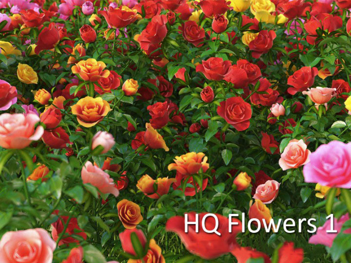 hdflowers_1 · hq_flowers_vol1_Contact ...